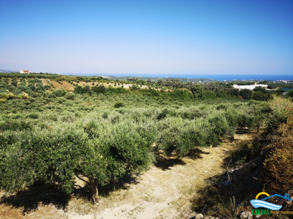 Excellent land for agriculture use with very well maintained olives trees