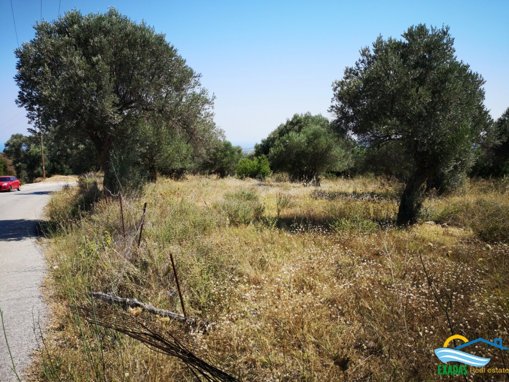Piece of land of 3607 sq.m planted  with Olive trees in Amnatos village