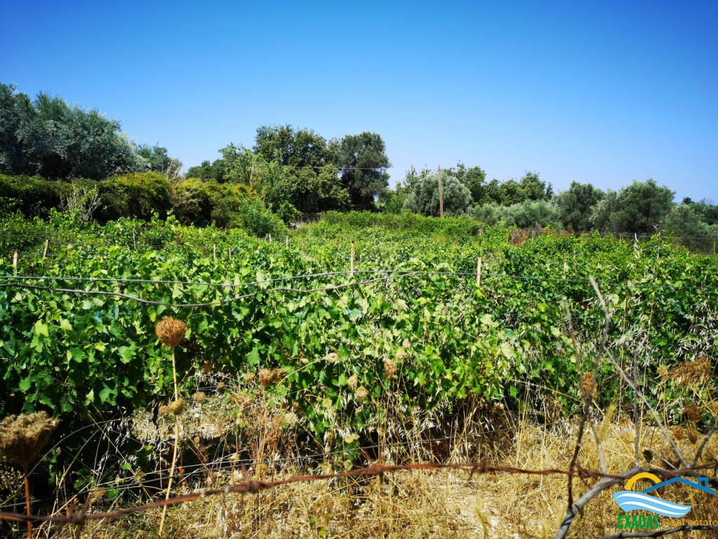 Piece of land of 1034 sq.m with  a small vineyard for sale in Amnatos village