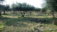 Plot of land of 1346 sq.m with building capacity of 400 sq.m in Agios Nikolaos, 5 kms from the beach