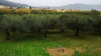Plot of land of 1050 sq.m for sale in Dramia, Chania including building permission for 2 houses